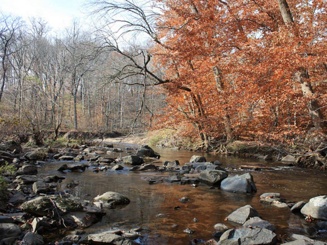 Enjoy a winter hike near the Pennypack Creek.