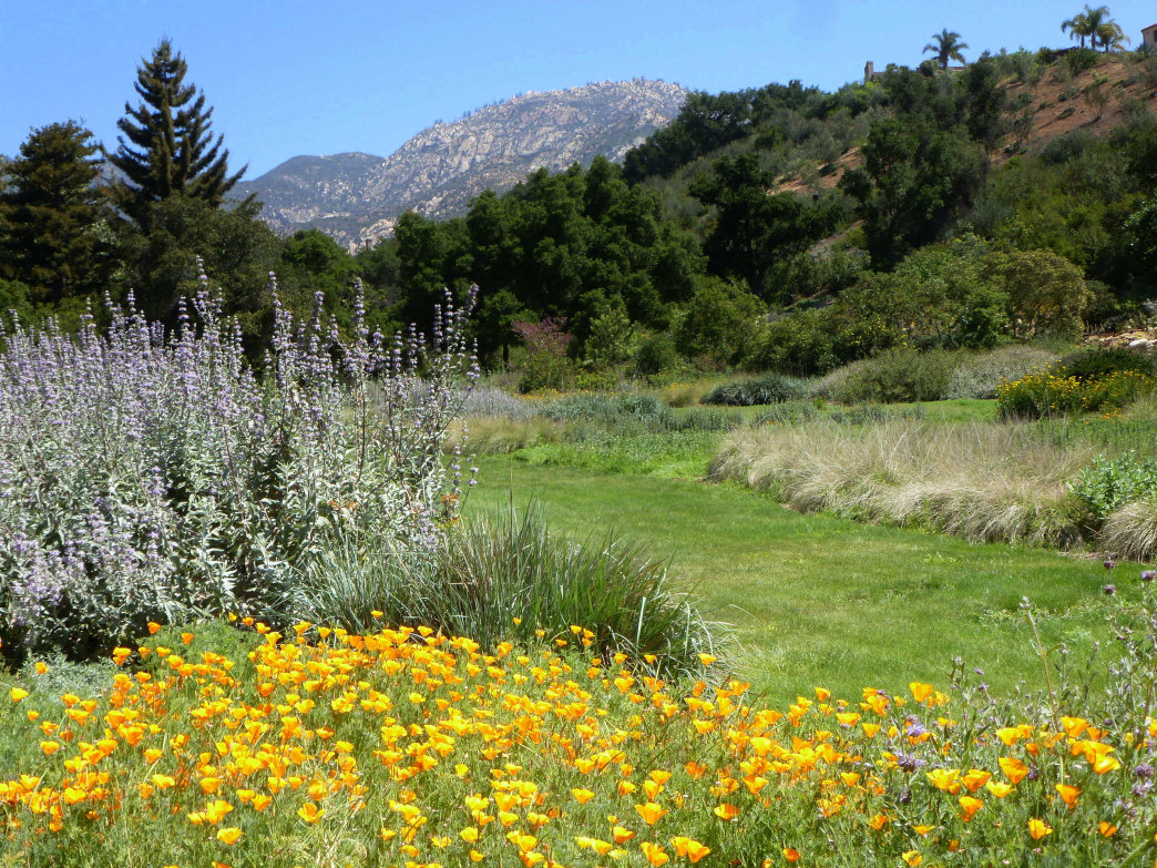 Wildflowers in bloom at one of Santa Barbara's favorite hiking destinations.