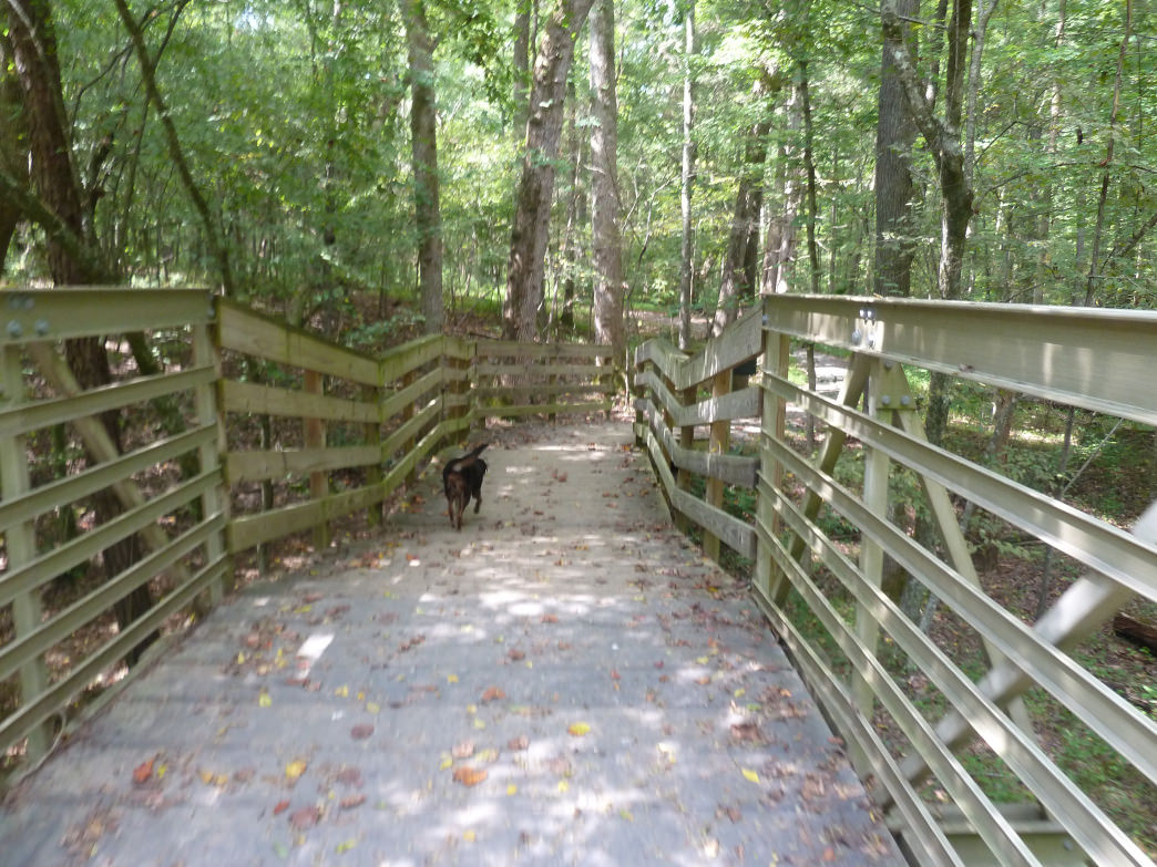 The trails and Carolina North Forest are great for all hikers, two-legged or four.