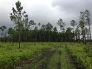 Image for Tosohatchee Wildlife Management Area - Mountain Biking