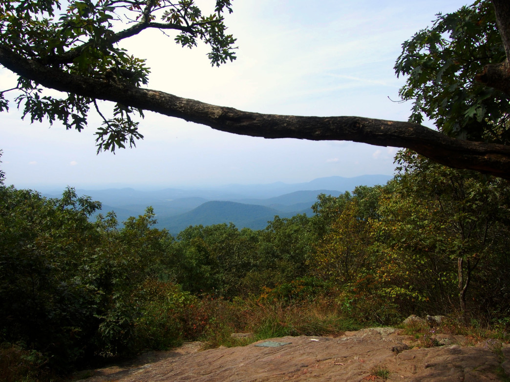 The view at Springer Mountain, Georgia.