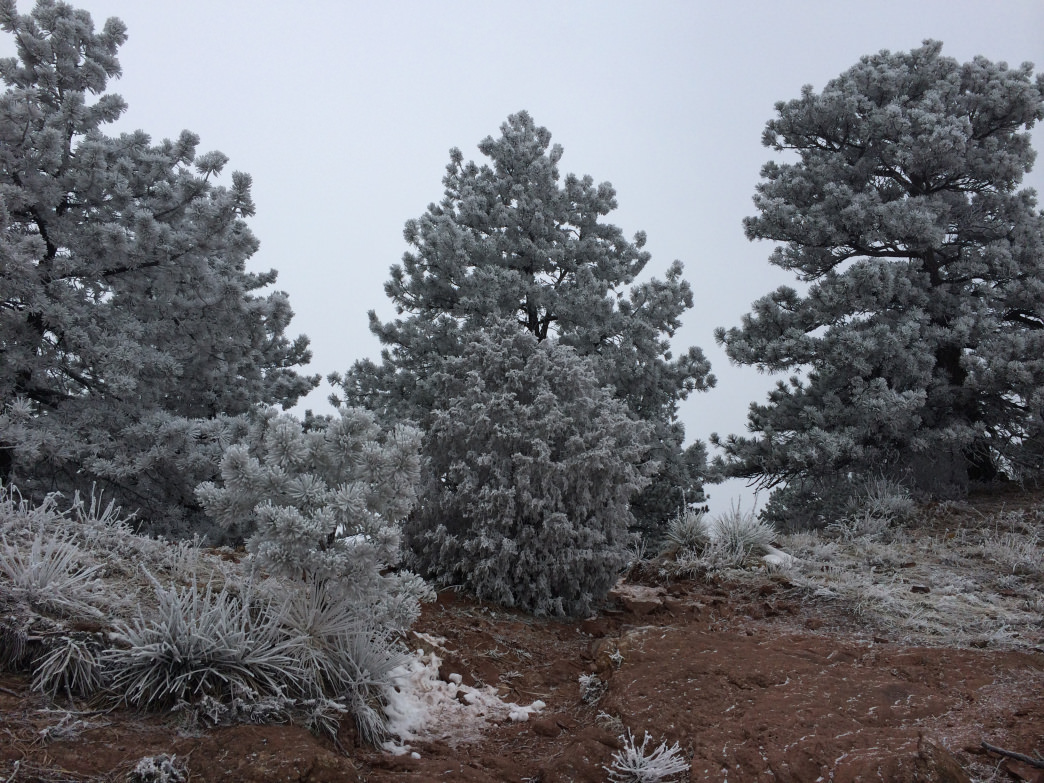 Frost-tipped trees after a storm remind us that Mount Sanitas is so familiar yet never the same.
