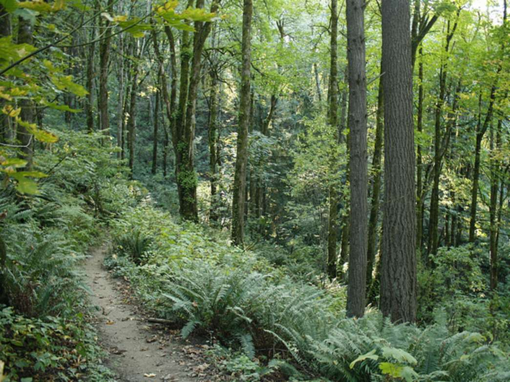 Forest Park is a popular destination with trail runners, given its numerous trail options and thick, forested canopy.