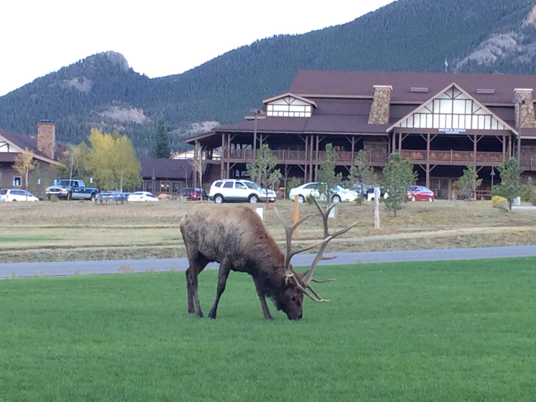 If you need a place to rest your head, the YMCA of the Rockies has a sprawling campus adjacent to Rocky Mountain National Park and comes with free elk views.