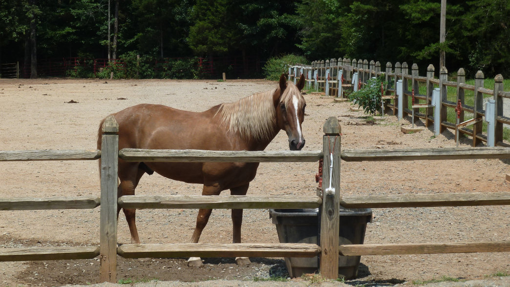 Kids can saddle up at the Latta Equestrian Center.