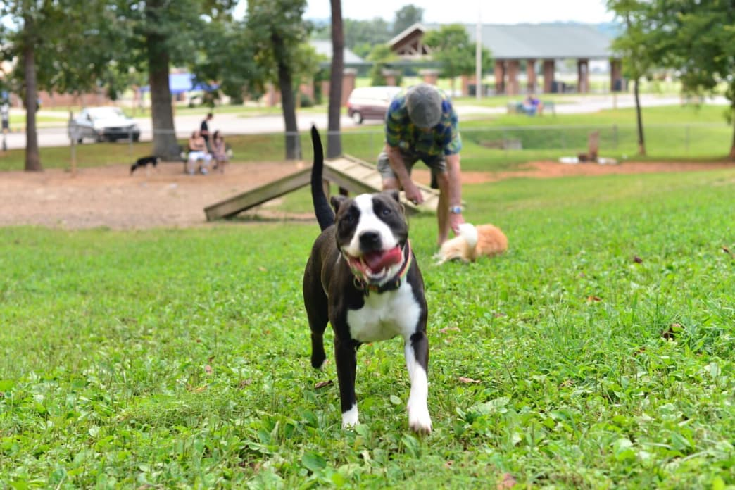 Pups always looking for someone to play with at the Victor Ashe dog park