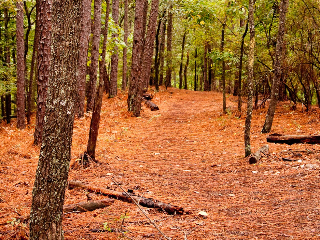 A backcountry campsite at Oak Mountain State Park is the perfect way to end a day spent exploring Birmingham.