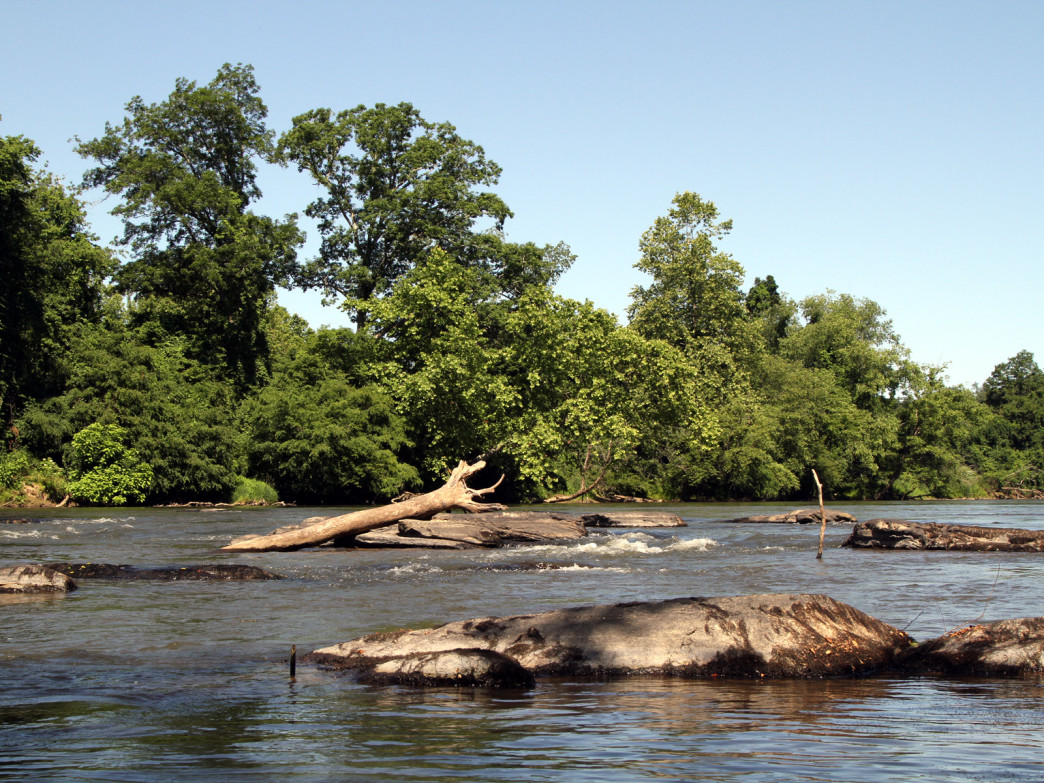 A typical section of the French Broad: wide open, easy rapids, with occasional rocks and downed trees.