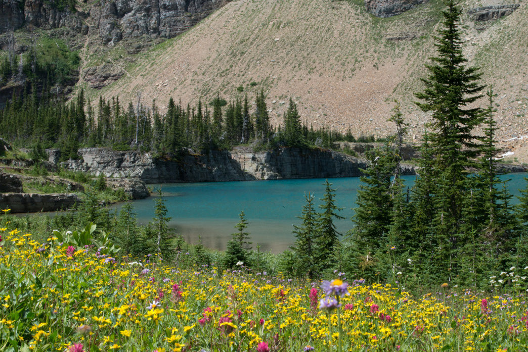 Wildflowers and gorgeous blue waters at Iceburg Lake.