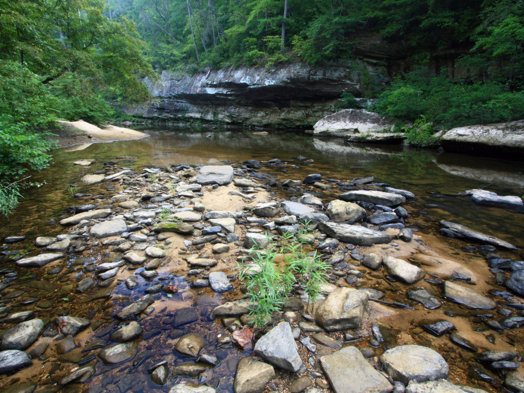 Find trout in the Sipsey Fork branch of the Black Warrior River.