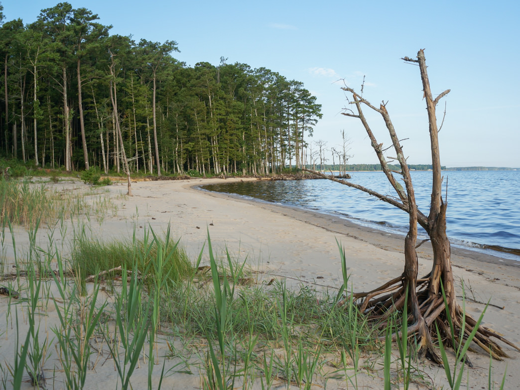 Explore the 21 miles of the Neusiok Trail System in the Croatan National Forest to see a wild side of the Crystal Coast.