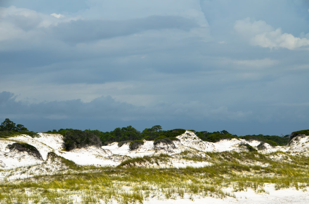 St. Andrews State Park offers a wide variety of habitats to explore.