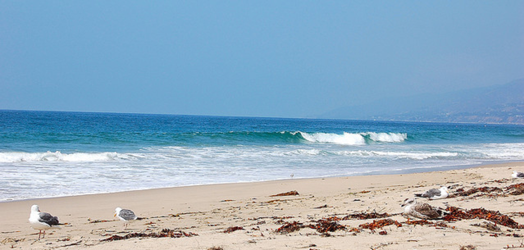 Zuma beach - Surfing in LA County, United States of ... |Surfing Zuma