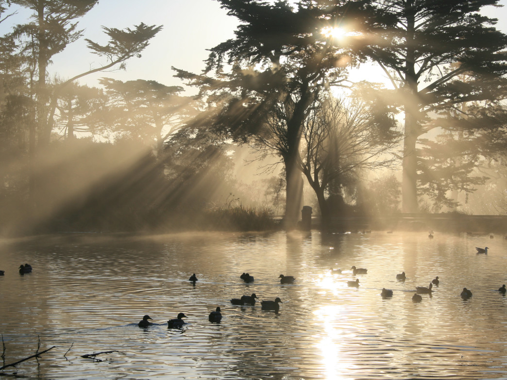 Golden Gate Park is full of ways to appreciate nature.