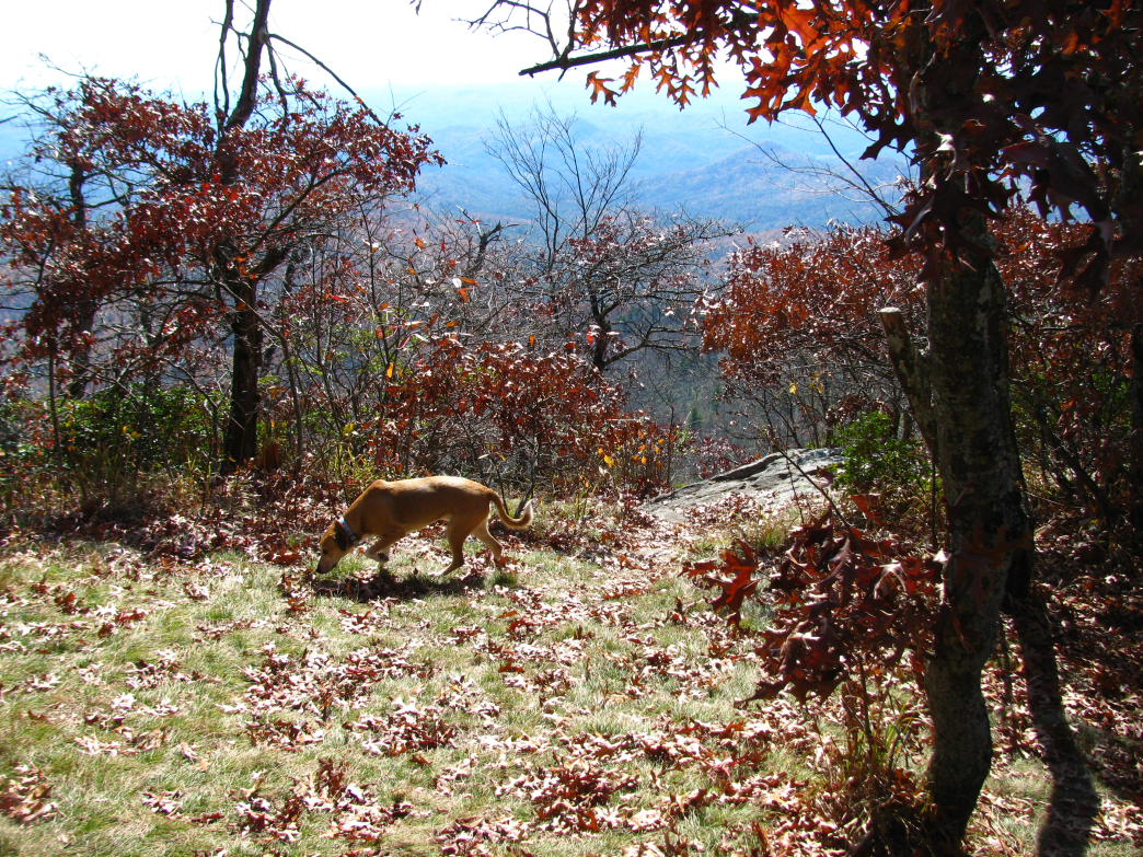 The Bartram Trail is 37 miles long and offers plenty of scenic views along the way.