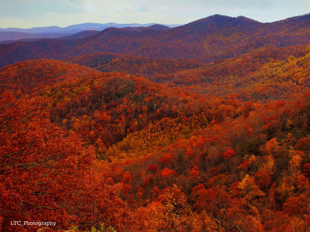 The mountains of Western Carolina donning their fiery October red.