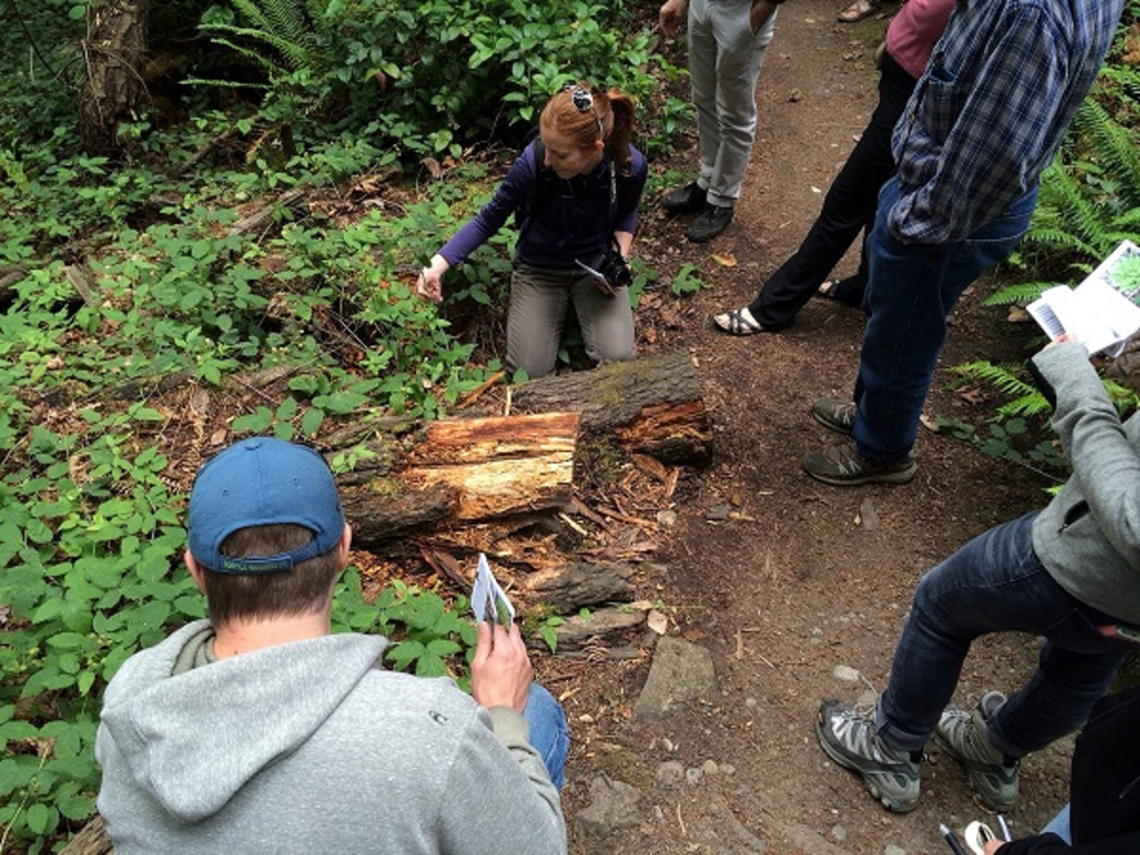Hikers learn about edible and medicinal plants during Beers Made By Walking hikes.