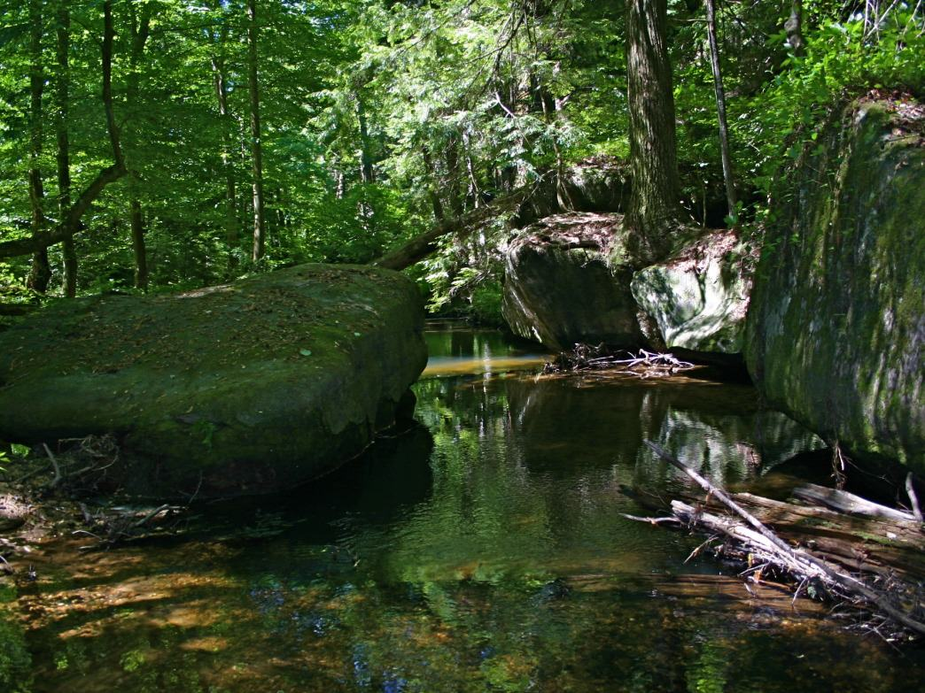 Dismals Canyon features a lush Alabama setting replete with a bioluminescent species of insect.