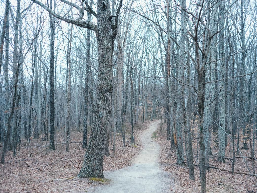 Winding winter hikes at Beaman Park.