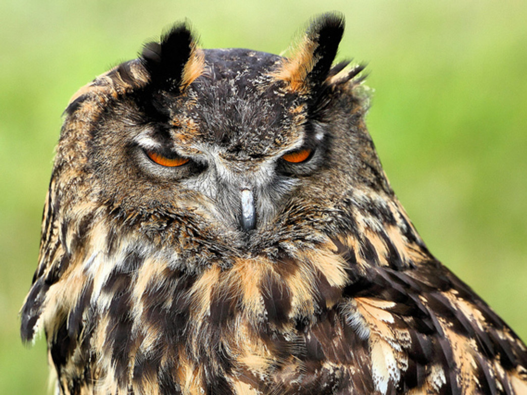 """Learn owl legend at lore at """"Owl-o-ween"""""""