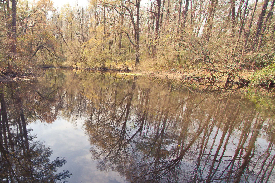 Aiken State Park features both wetlands and hardwood forest to explore.