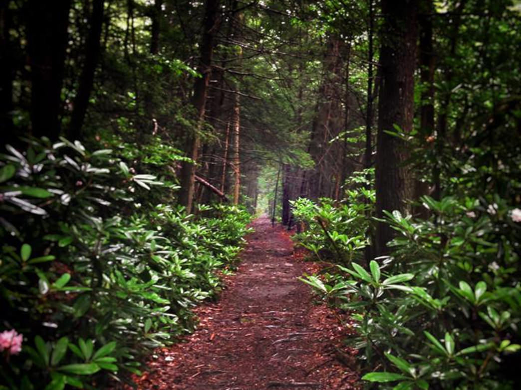 A trail tunnels through the think canopy of Cathedral State Park.