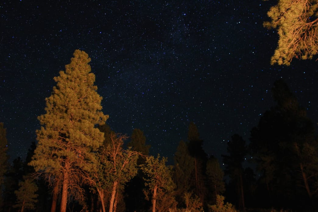A starry night beneath the ponderosa pines of Kaibab National Forest. Brian Bates