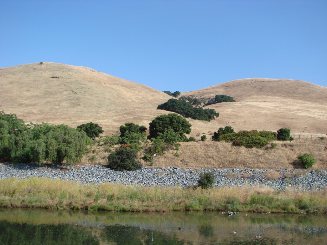 Alameda Creek Regional Trail is perfect if you're looking for a flat route with wildlife viewing opportunities.