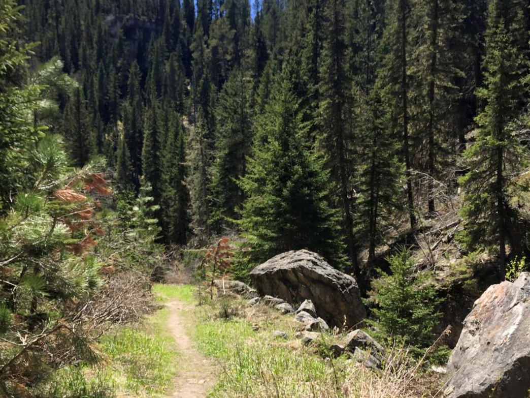 On the Trail on Iron Creek! Beautiful in the Spring.