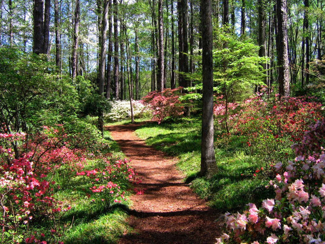 The gorgeous trails in Callaway Gardens are worth taking the short drive from Atlanta to hike.