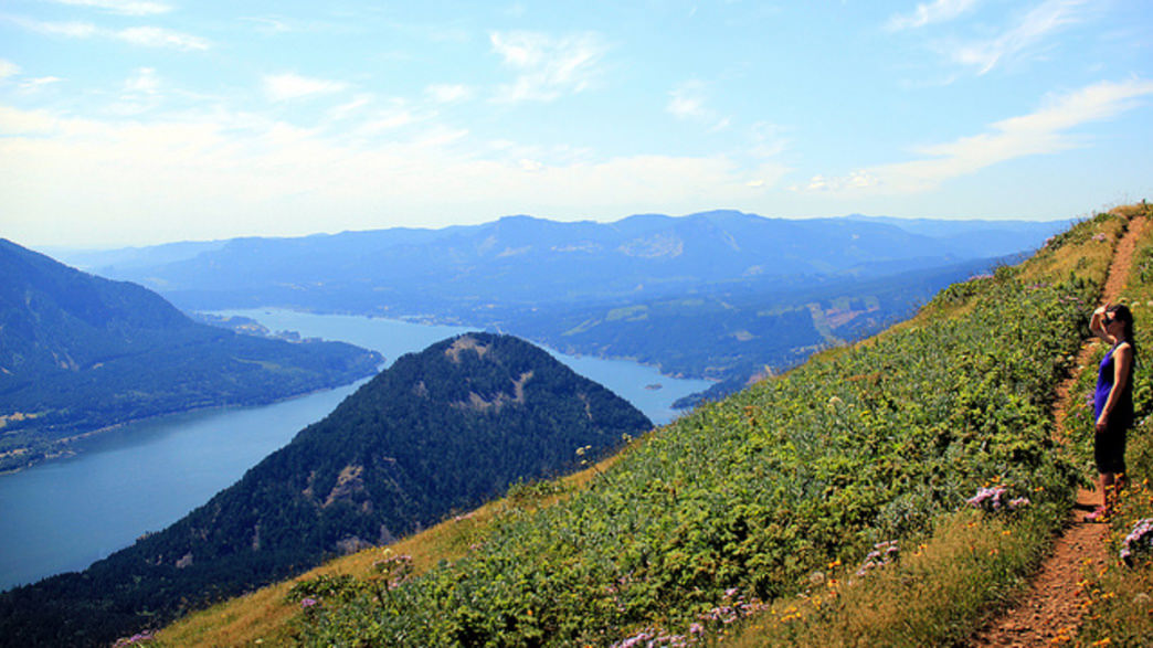Dog Mountain is among the most popular hikes in the Columbia River Gorge, due in large part to its stunning wildflower displays.