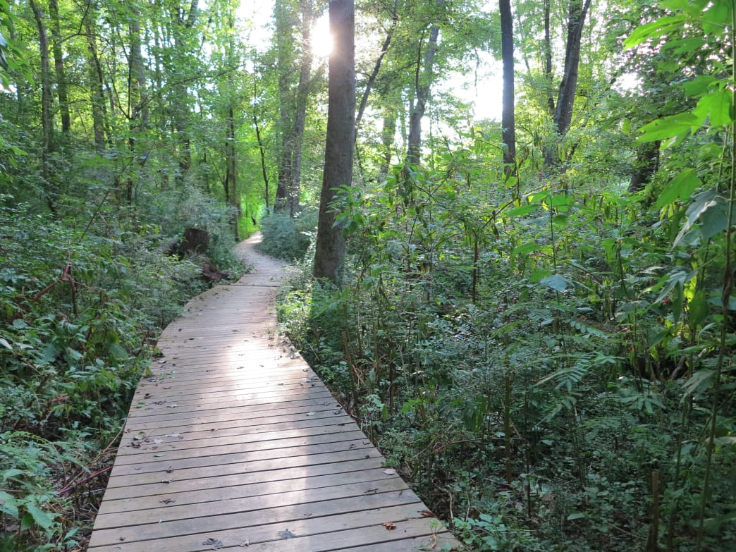 Morningside Nature Preserve (Northeast Atlanta)