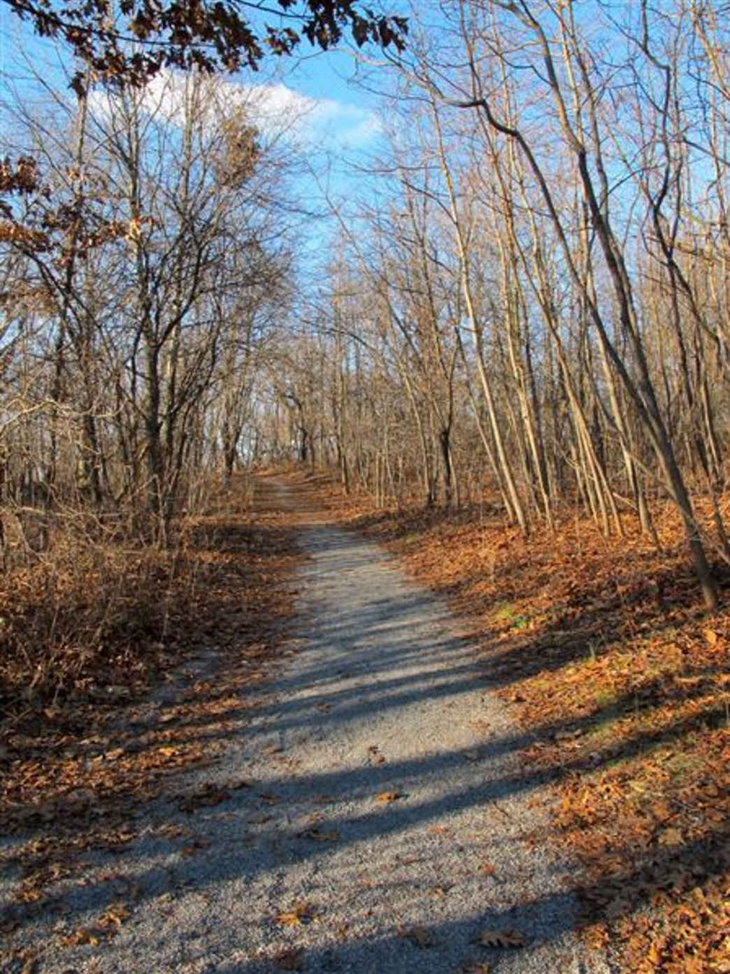 Van Courtlandt Park - Trail Running