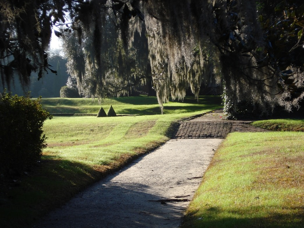 Early morning at Middleton Place
