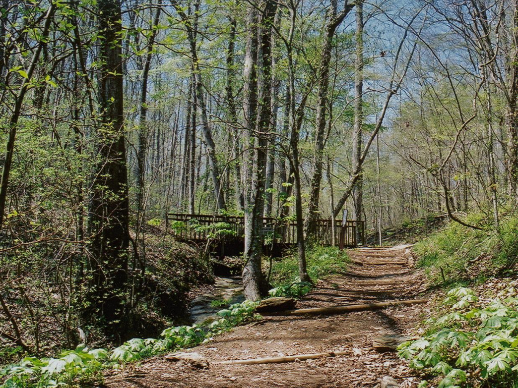 The Elachee Nature Center offers a beautiful hike in a convenient location.