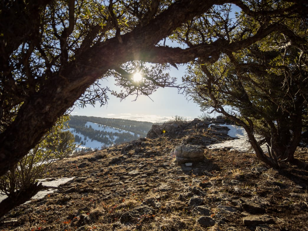 The Limber Pine Nature Trail is a relatively short hike with outstanding views.