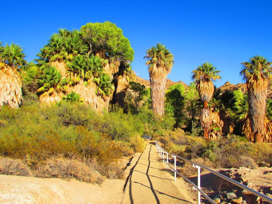 Cottonwood Spring is one of the best-kept secrets in Joshua Tree National Park.     Allison Barnes