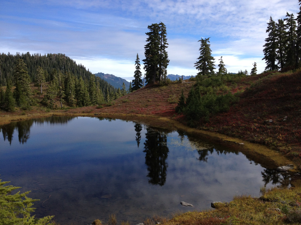 Lake and mountain hemlocks along the Queets-Quinault Divide.