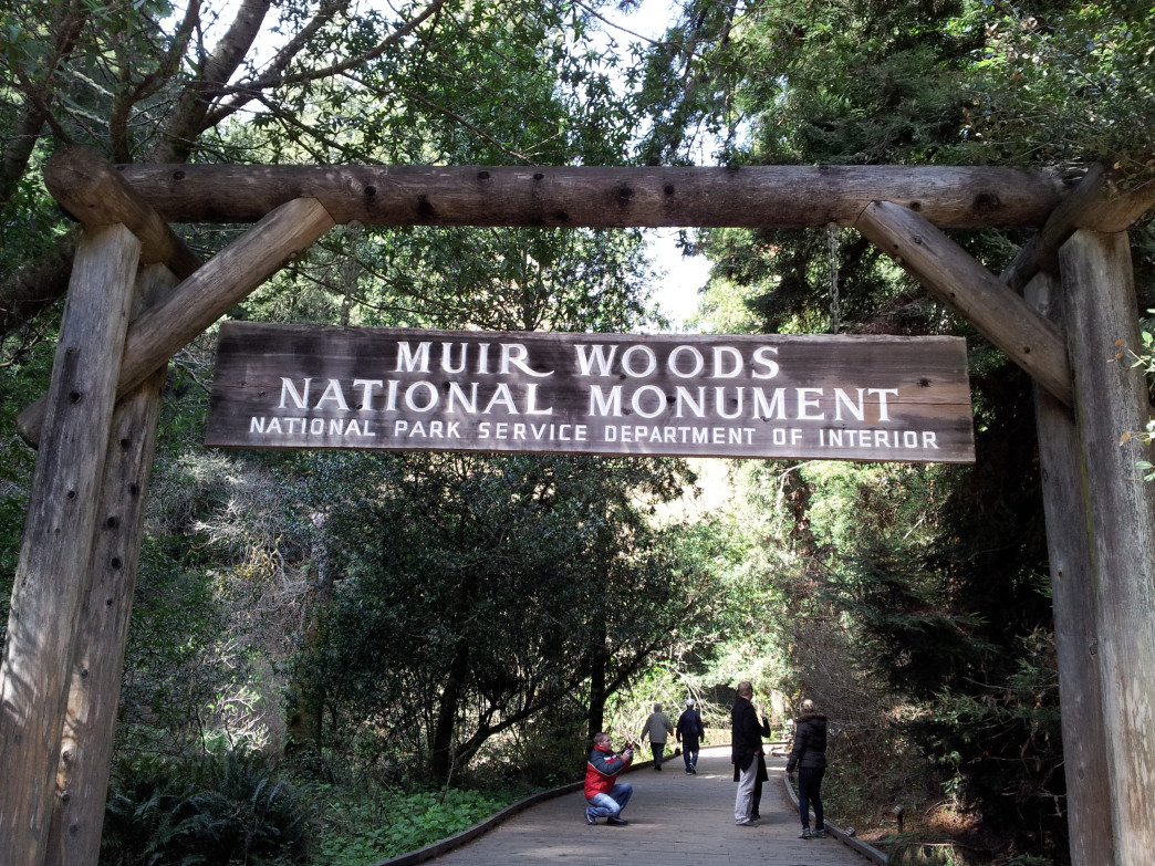 Muir Woods National Monument Hiking