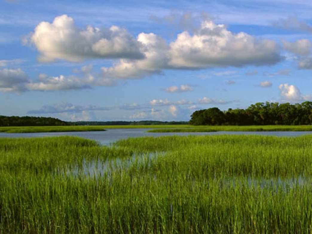 Vibrant salt marshes are part of the landscape at Pinckney Island National Wildlife Refuge