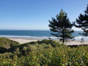 Image for Ano Nuevo State Park