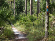 Image for Wekiwa Springs - Mountain Biking