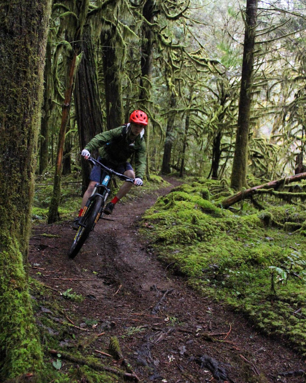 b0d7db5eed7 The McKenzie River Trail has everything you'll love in a long Oregon bike  trail