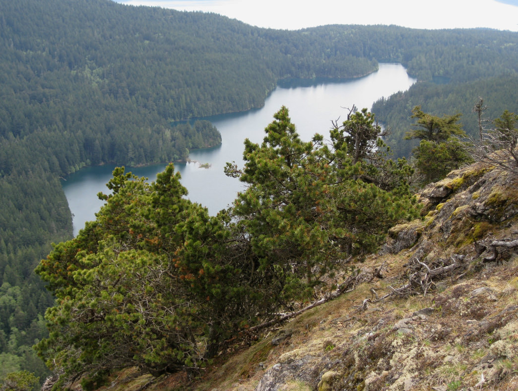 Climb Mount Constitution for a fantastic view of the lake.