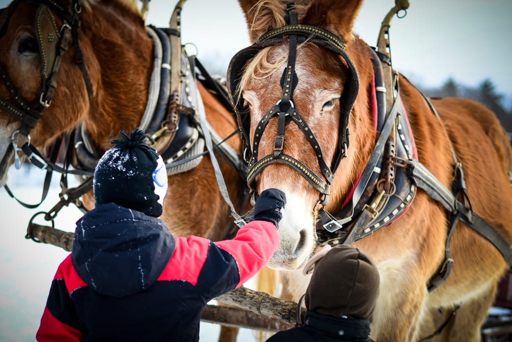 Horse-Drawn Sleigh Rides are a Must in the Poconos