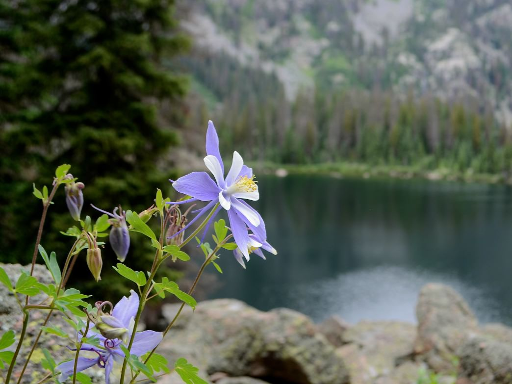 Wildflowers bloom at the edge of Emerald Lake.