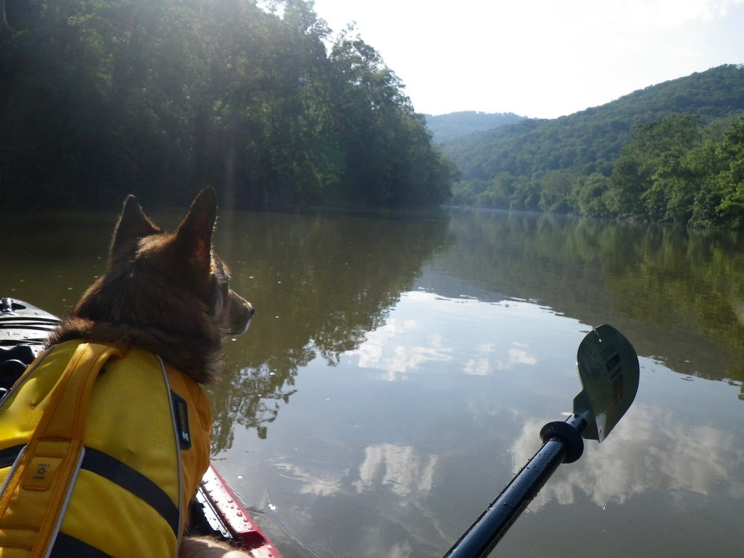 Paddling the Greenbrier Near Hinton