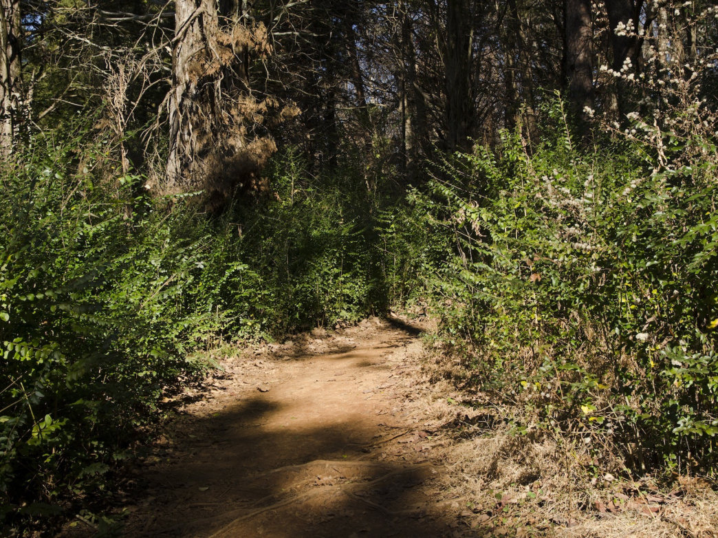 A trail in Knoxville's Concord Park.