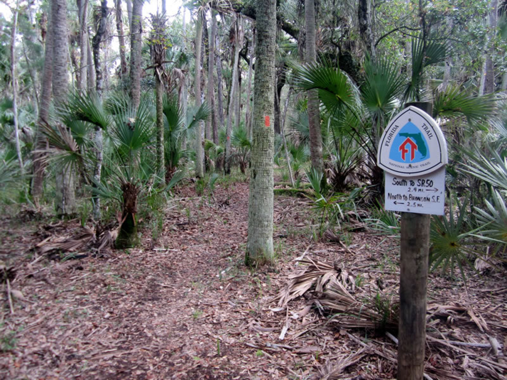 One of the trail markers you'll see in the Central Region of the Florida Trail