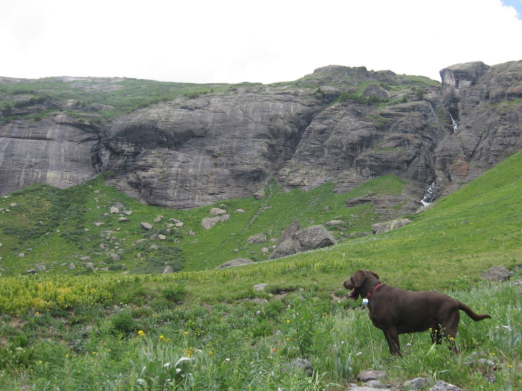 Wildflowers and waterfalls in Lower Ice Lakes Basin offer captivating views for everyone, dogs included.